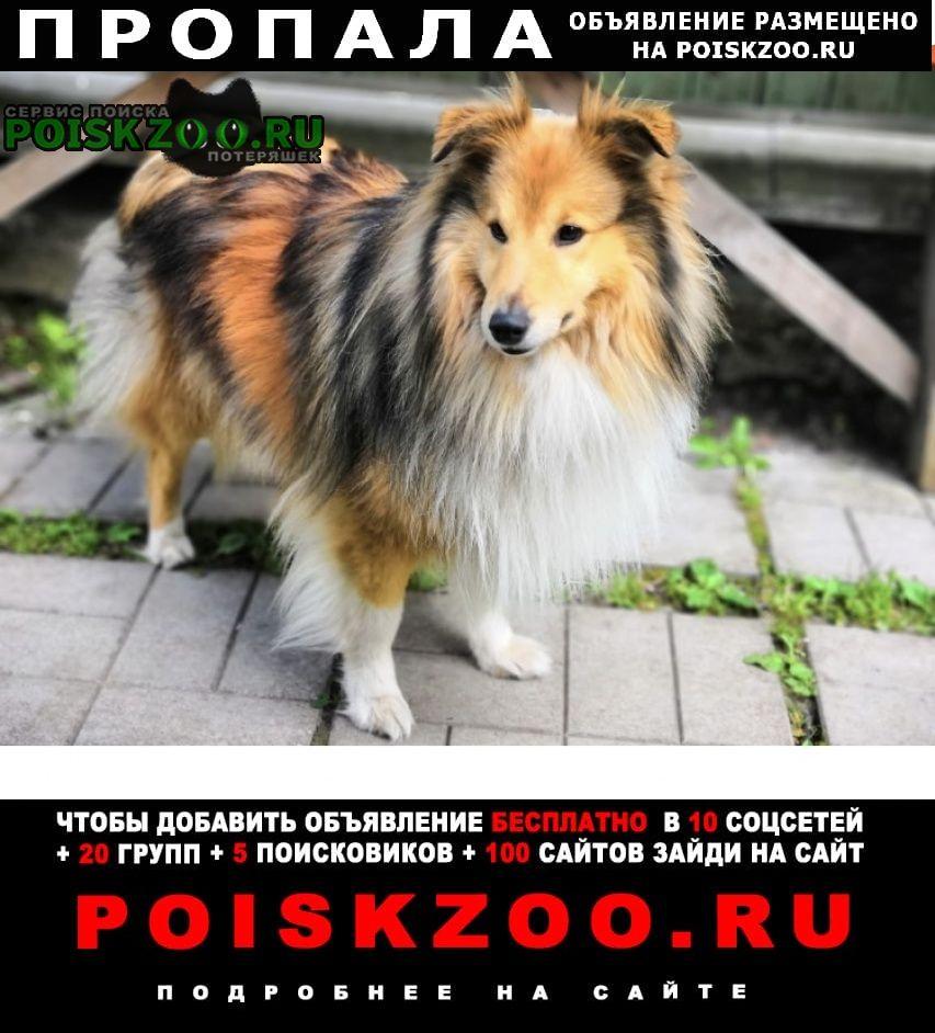 Пропала собака кобель вознаграждение 50000 гарантируется Апрелевка