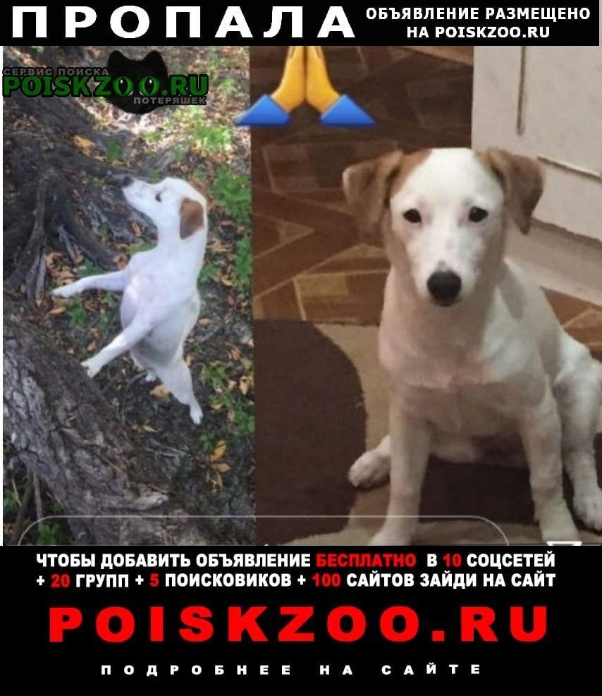 Пропала собака пожалуйста помогите найти Астрахань