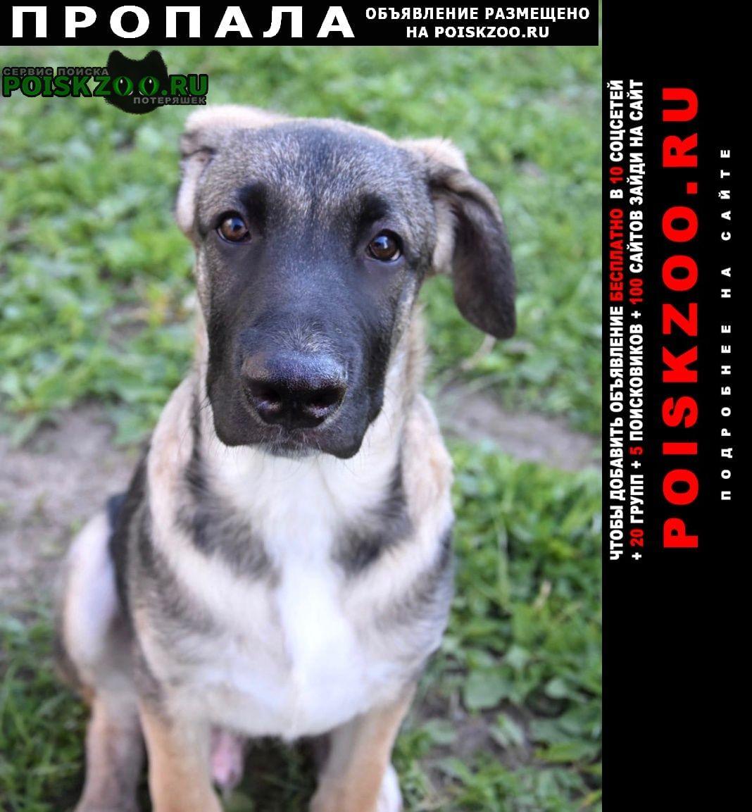 Пропала собака кобель щенок Москва