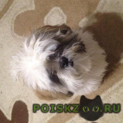 Пропала собака кобель г.Львовский