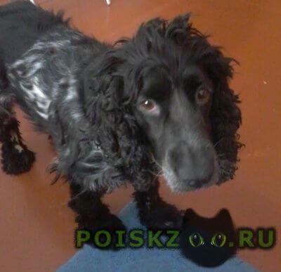 Пропала собака г. г.Красноярск