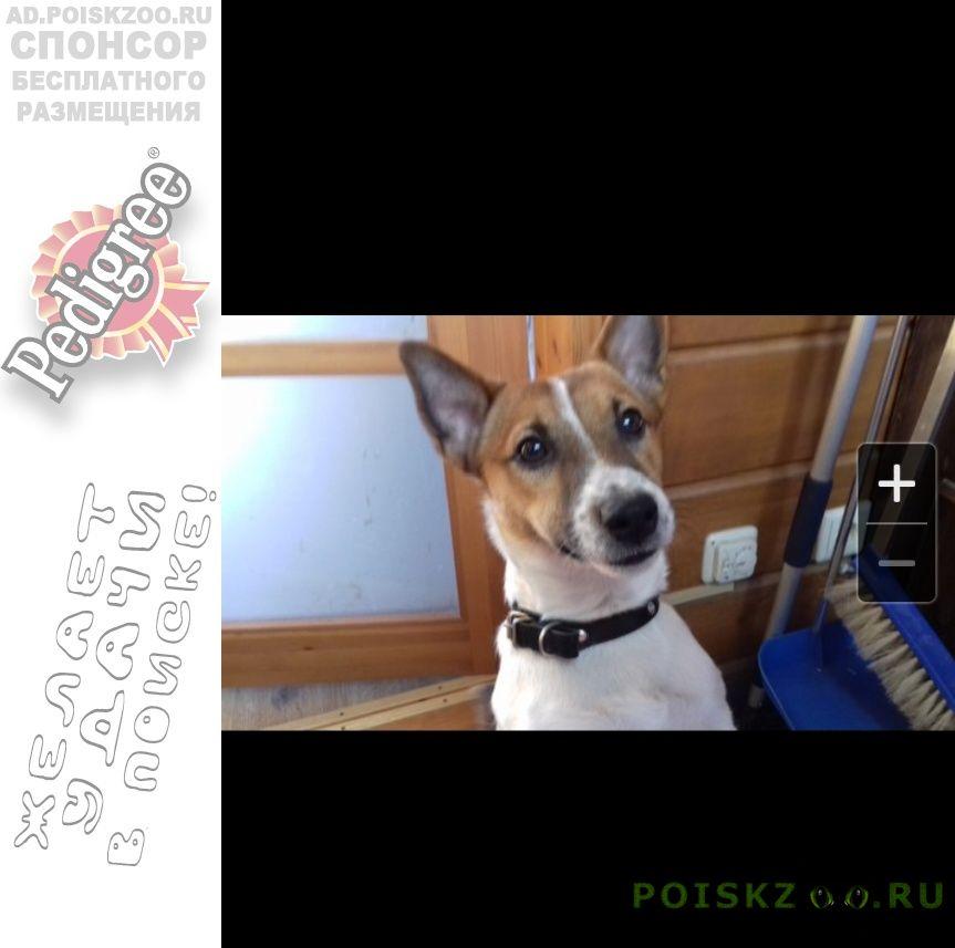 Пропала собака кобель г.Петрозаводск