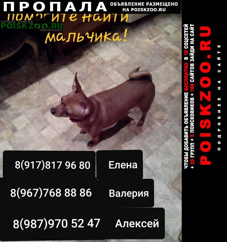 Пропала собака кобель очень прошу помощи Самара