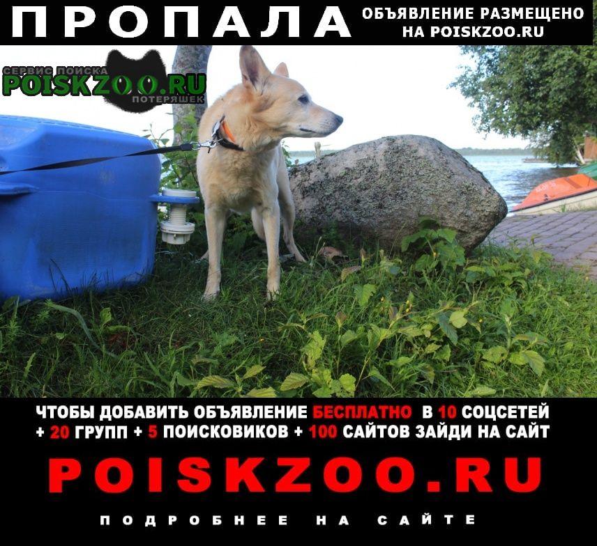 Пропала собака кобель пёс. Москва