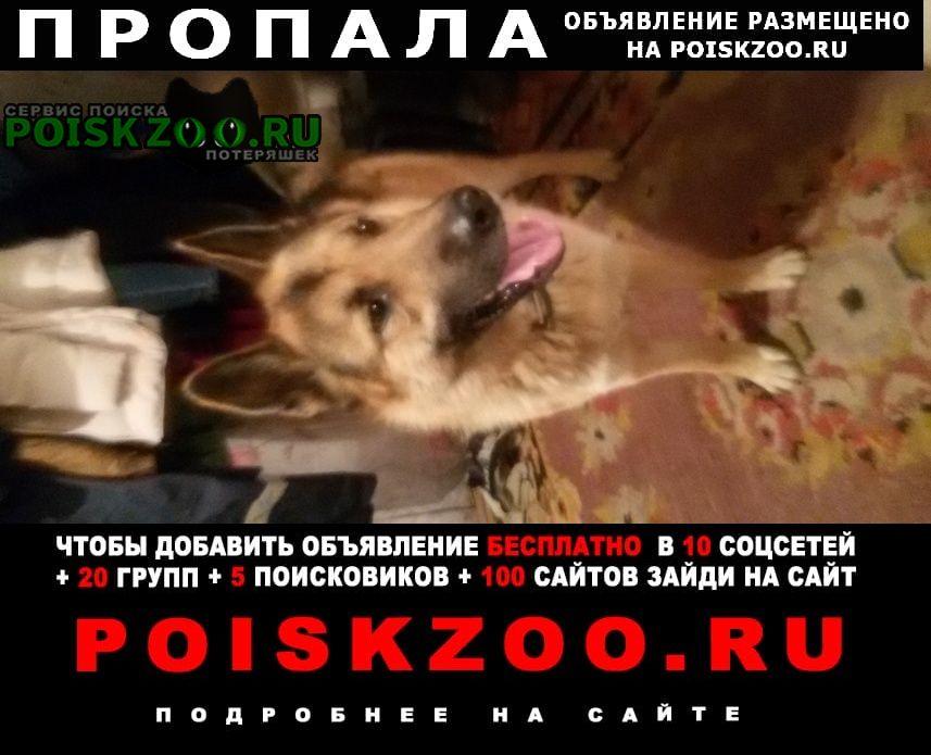 Пропала собака потерялась Пермь