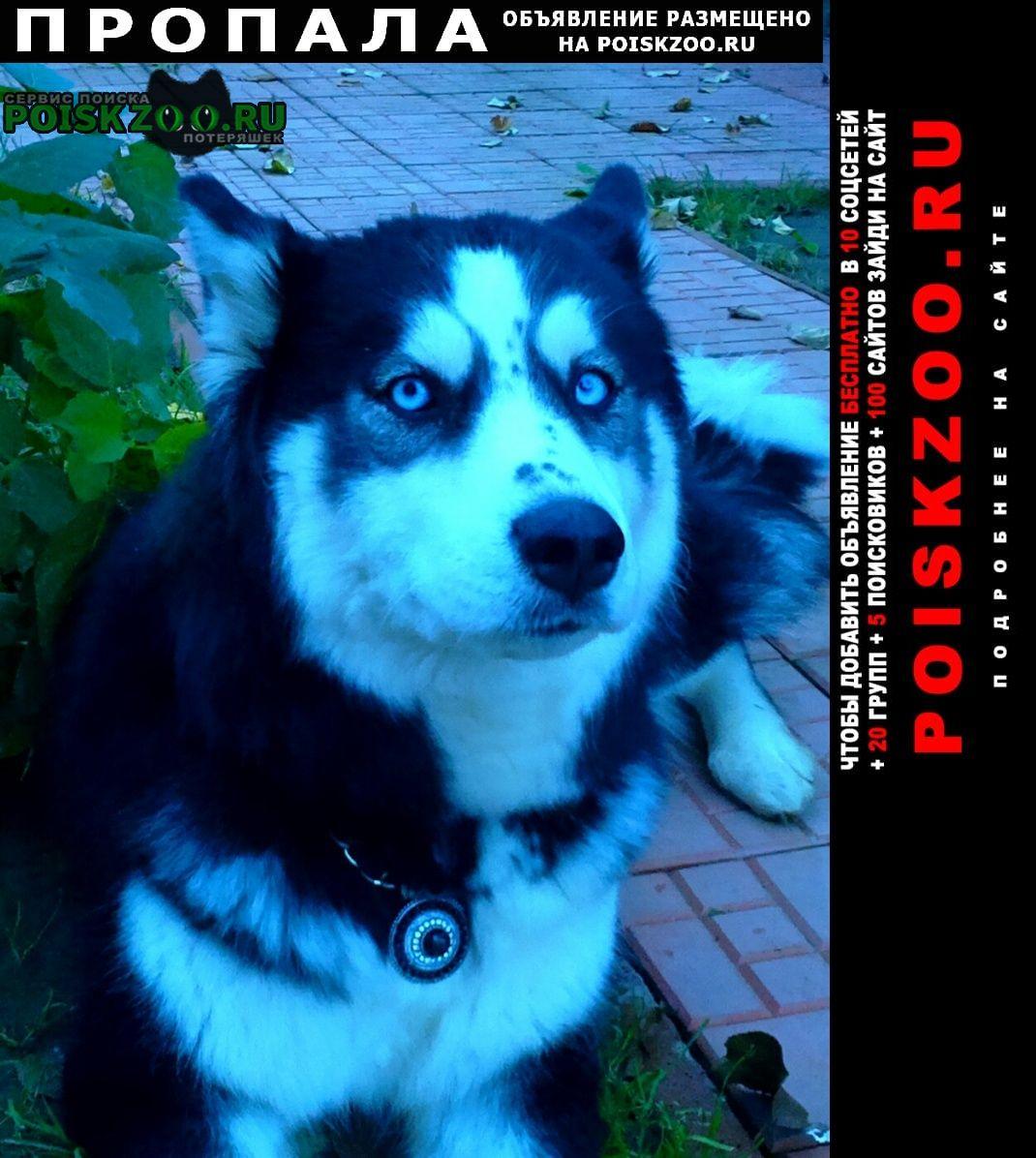 Пропала собака любимая Домодедово