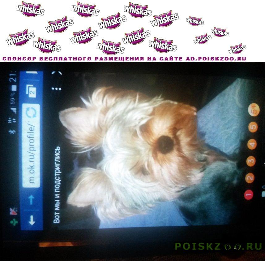 Пропала собака г.Зеленоград