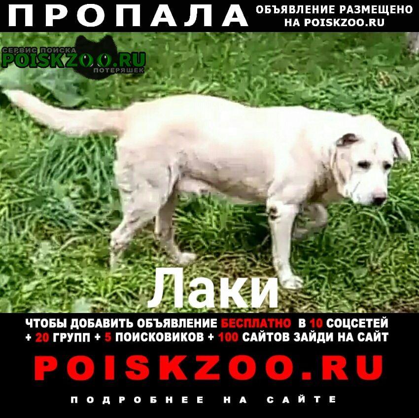 Пропала собака лабрадор убежал, девочка Москва