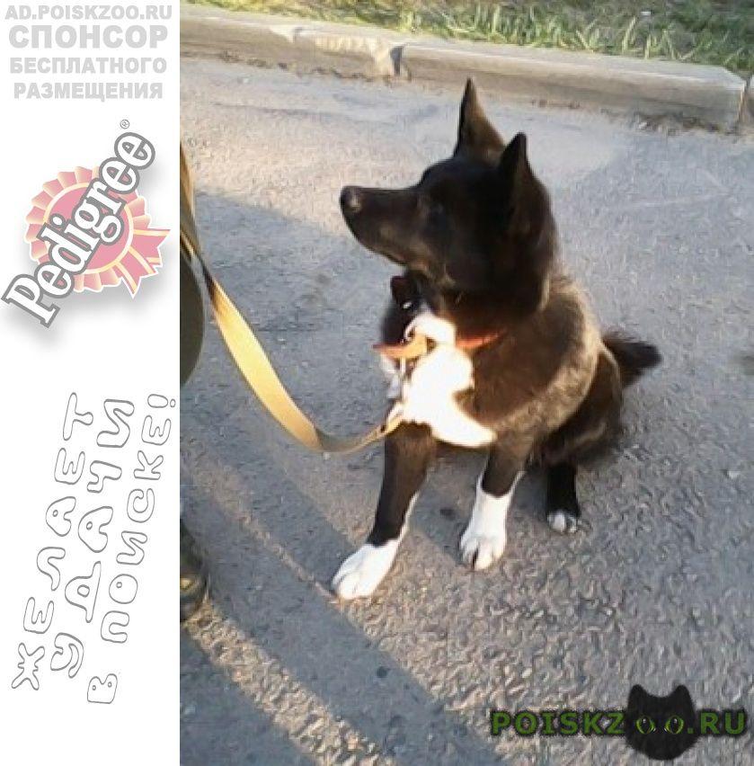 Пропала собака кобель г.Солнечногорск