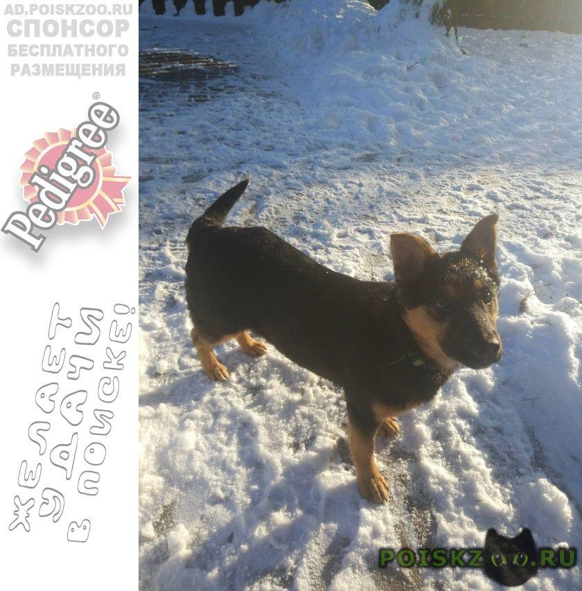 Пропала собака очень просим помочь найти г.Пушкино
