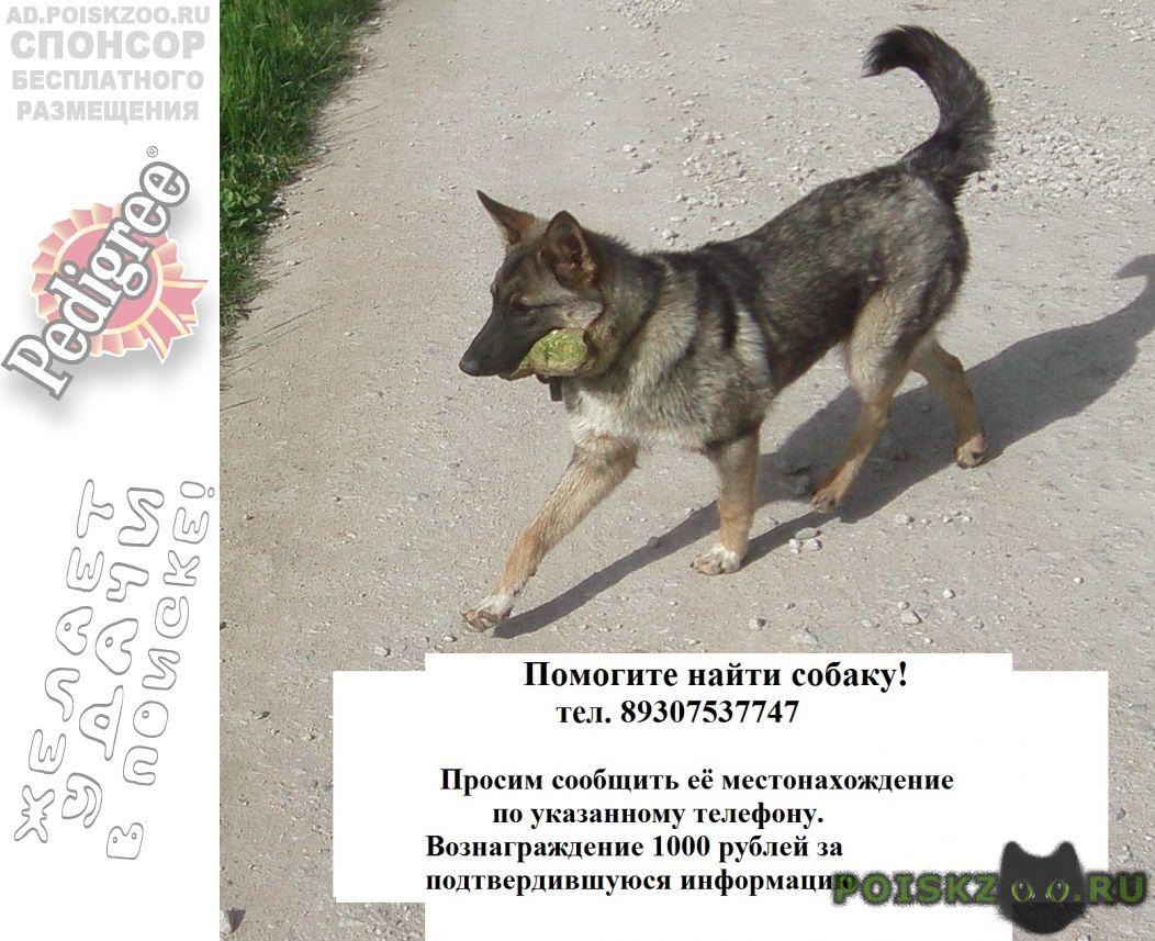 Пропала собака кобель г.Ферзиково