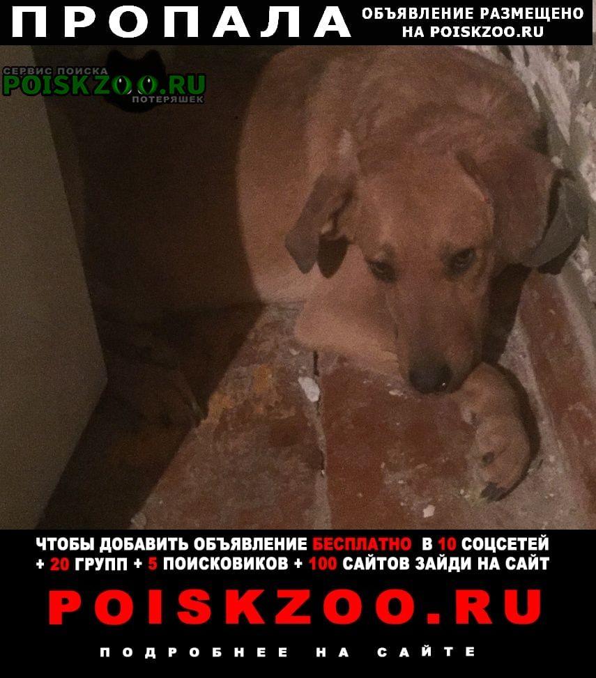 Пропала собака кобель в п. смышляевка самаркой обл. Самара
