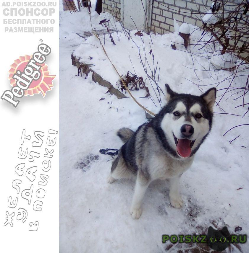 Пропала собака г.Белгород
