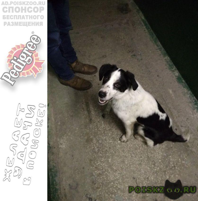 Пропала собака порода на фотографии. пехотинцев 12 г.Екатеринбург