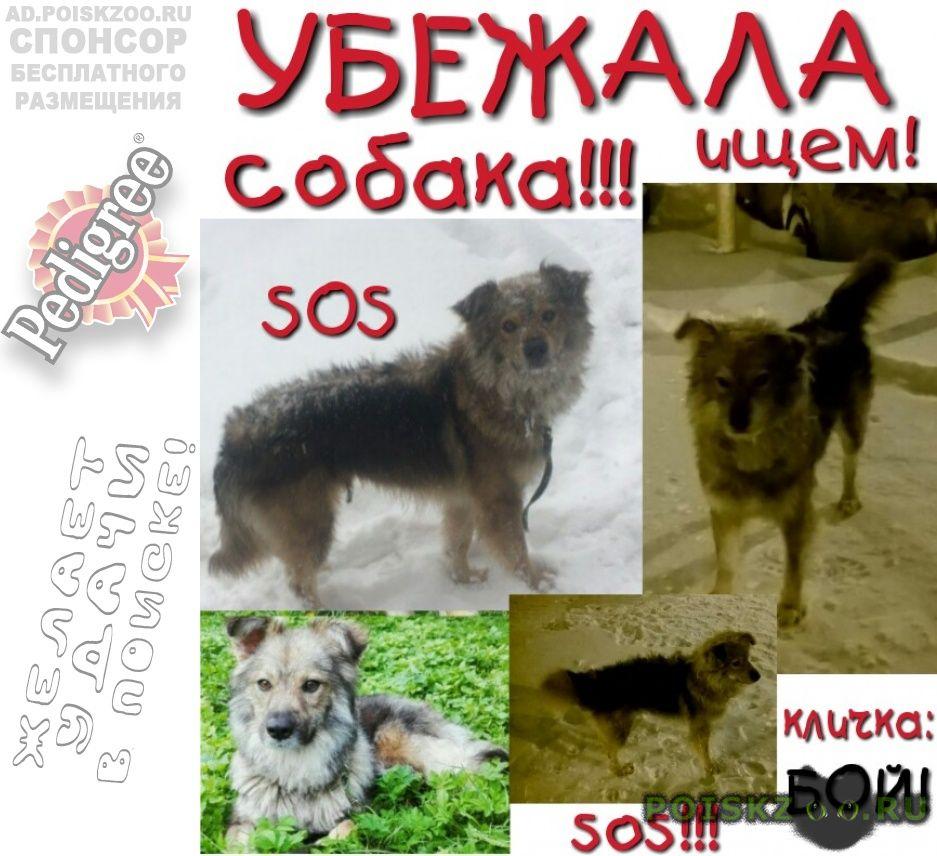 Пропала собака кобель ( ) г.Мытищи