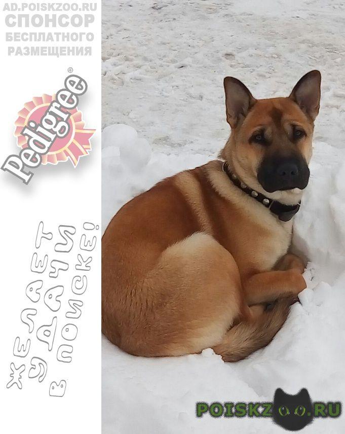 Пропала собака кобель за вознаграждение г.Петропавловск-Камчатский