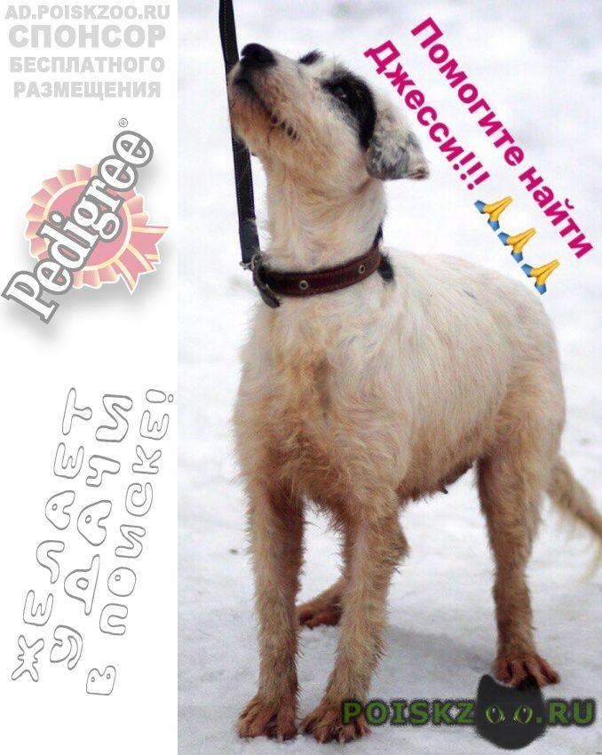 Пропала собака ее видели в крылатском г.Москва