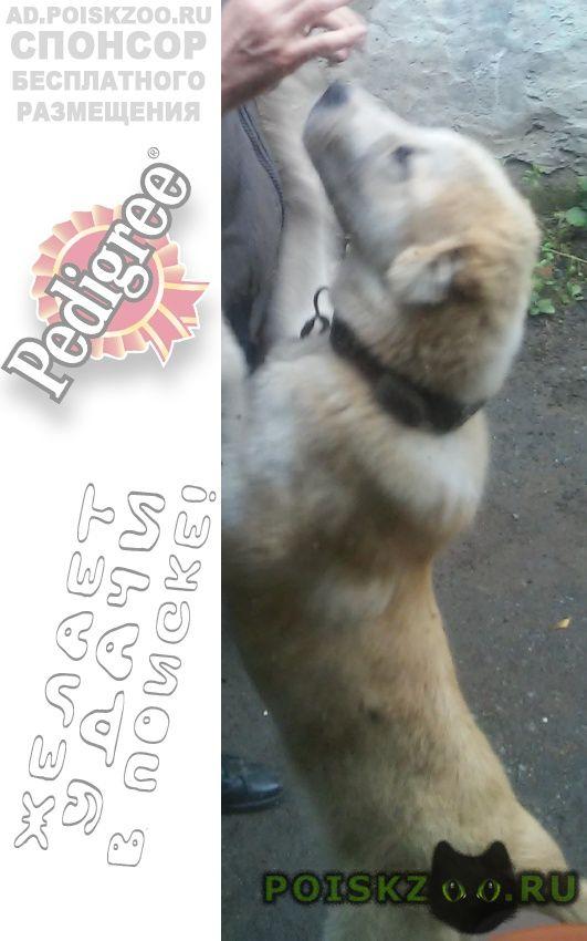 Пропала собака кобель г.Екатеринбург