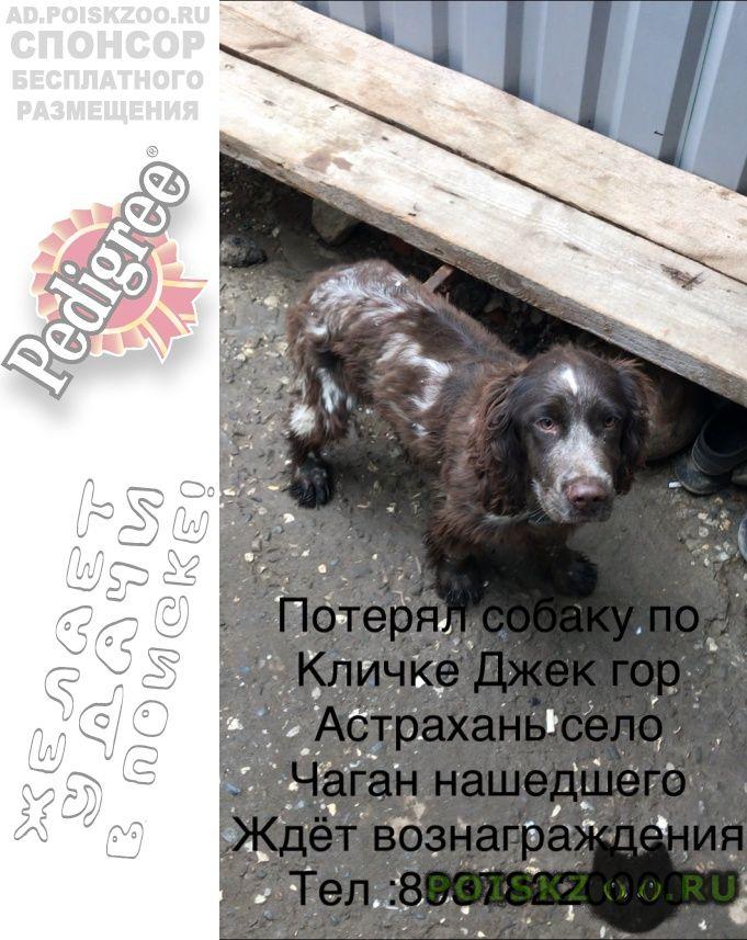 Пропала собака ищу собаку г.Астрахань