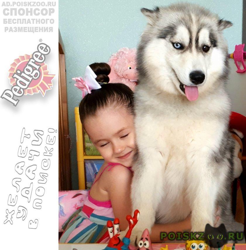 Пропала собака #; #; #; #; #; #; #; #; #; #; #; #; #; #; #; г.Городище (Волгоградская обл.)