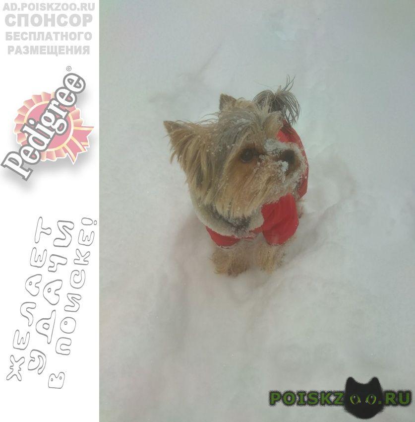 Пропала собака кобель в марьино йорк г.Москва