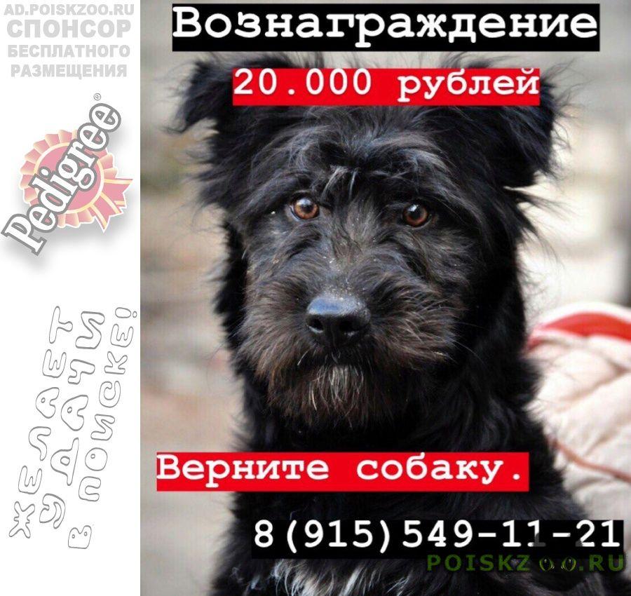 Пропала собака  г.Воронеж