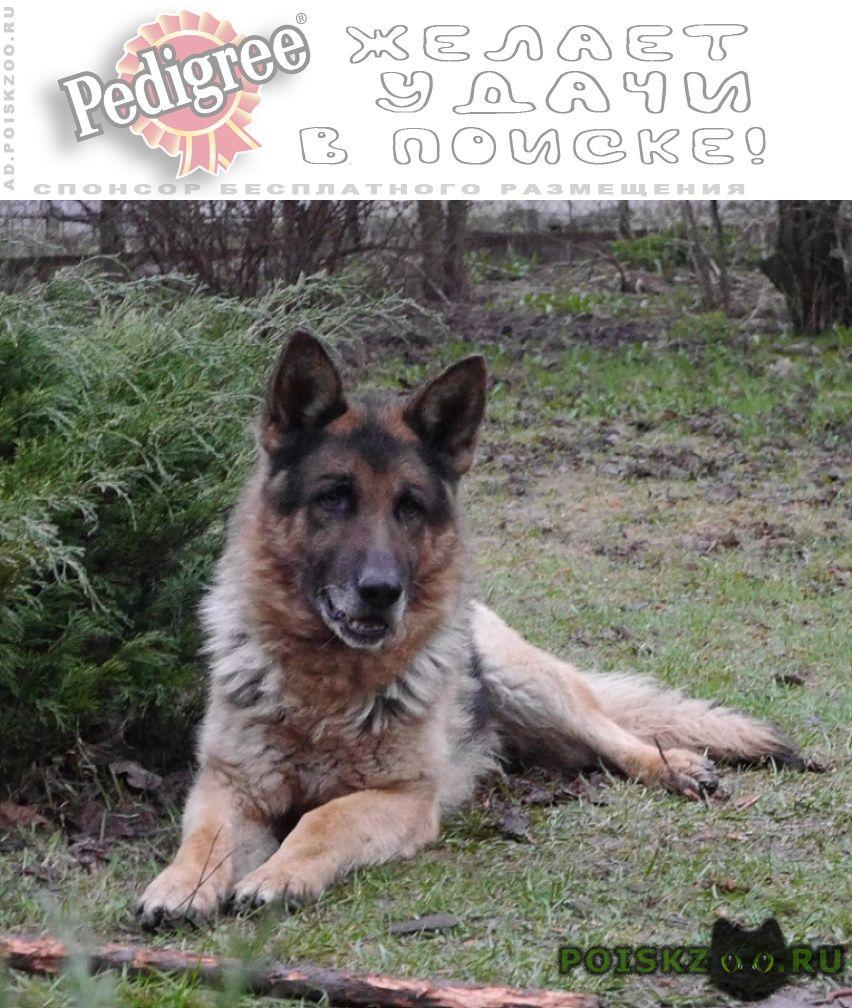 Пропала собака кобель ушел с участка в жостово 07.01.18 г.Мытищи