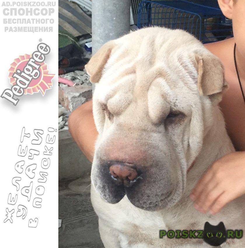 Пропала собака кобель г.Славянск-на-Кубани