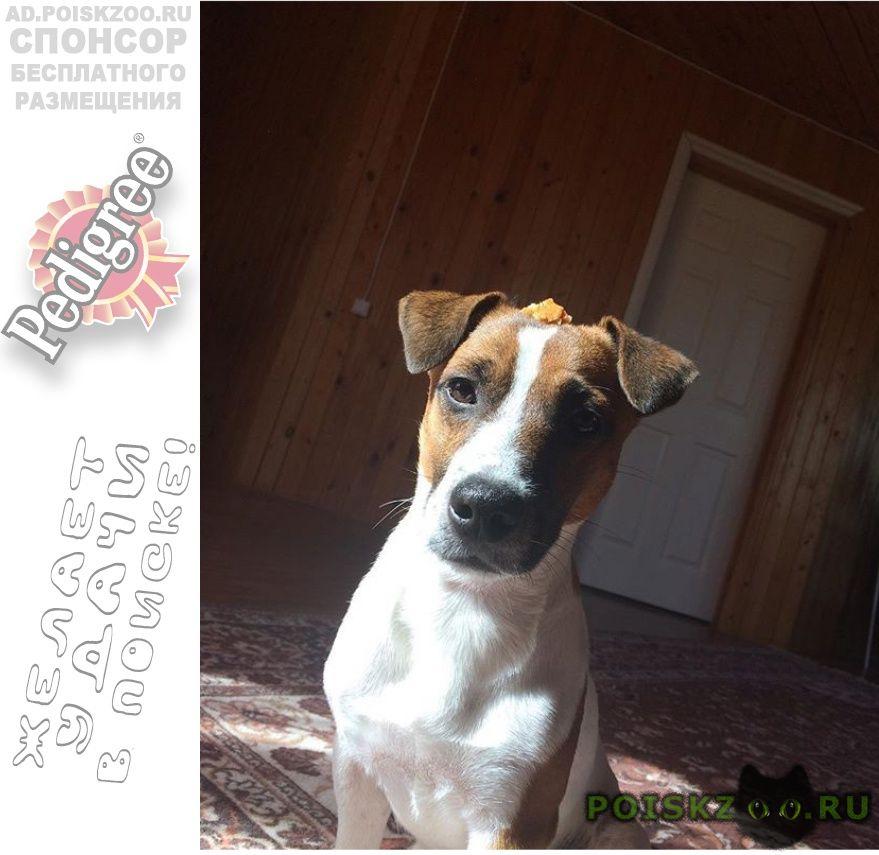 Пропала собака кобель вознаграждение за находку собаки г.Москва