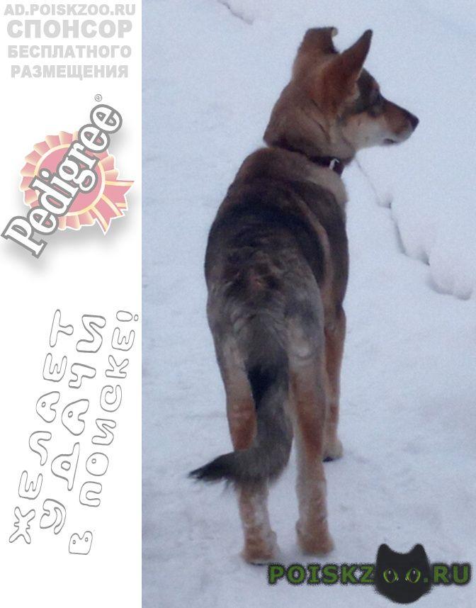 Пропала собака г.Усолье-Сибирское (Иркутская обл.)