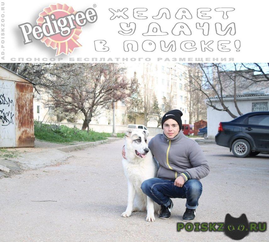 Пропала собака помогите найти г.Севастополь