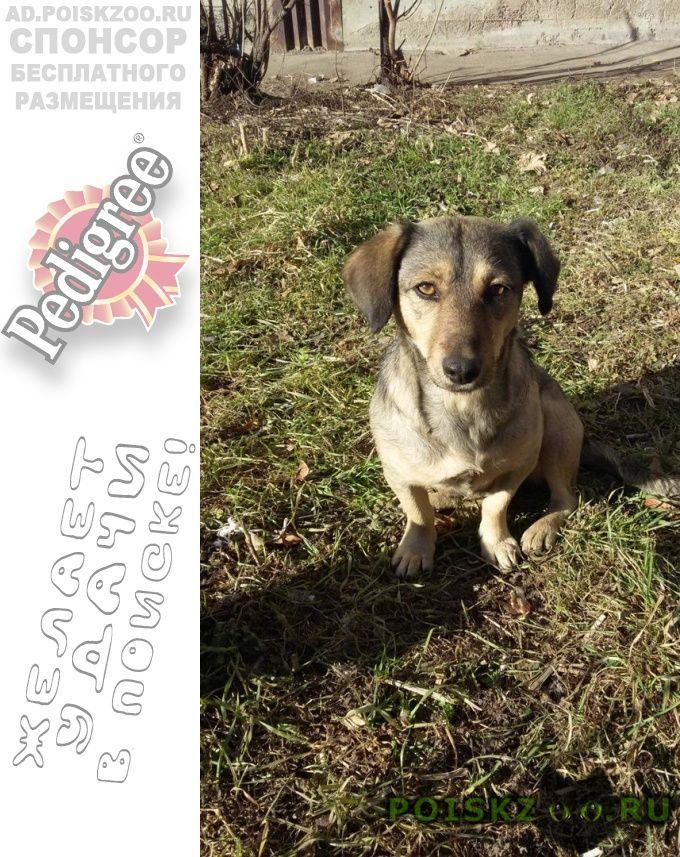 Пропала собака город   г.Владикавказ