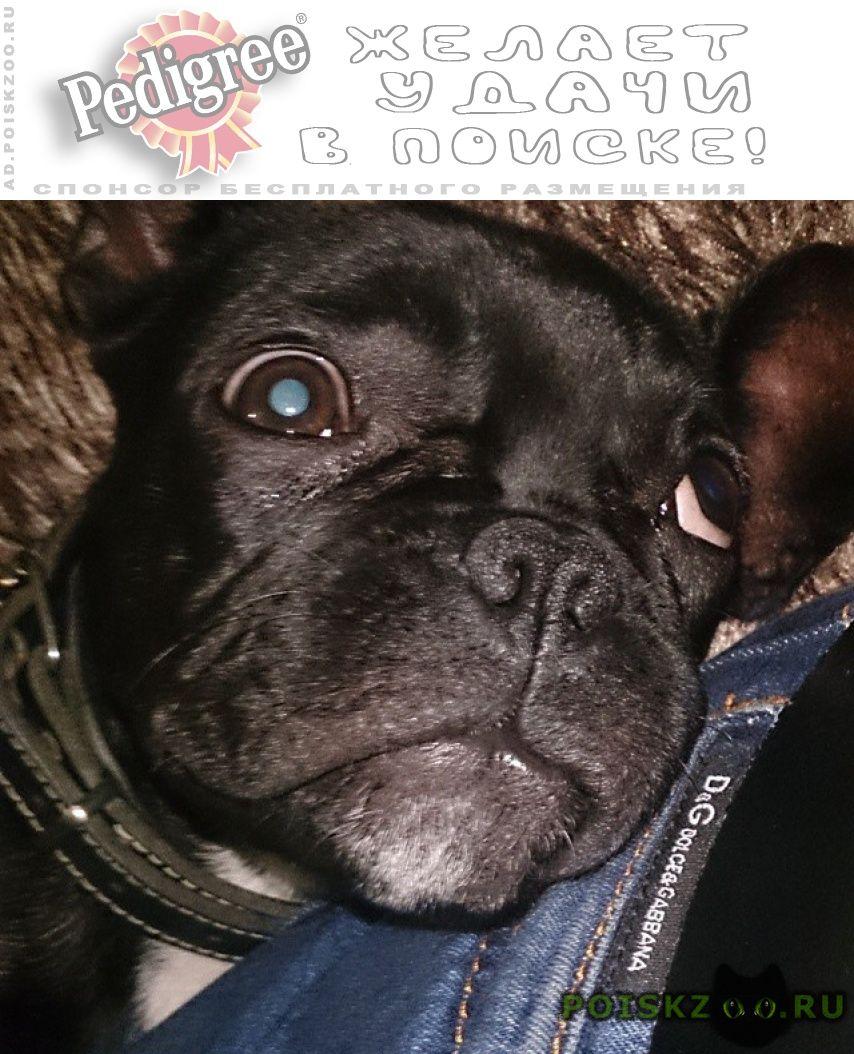 Пропала собака кобель в районе фмр г.Краснодар