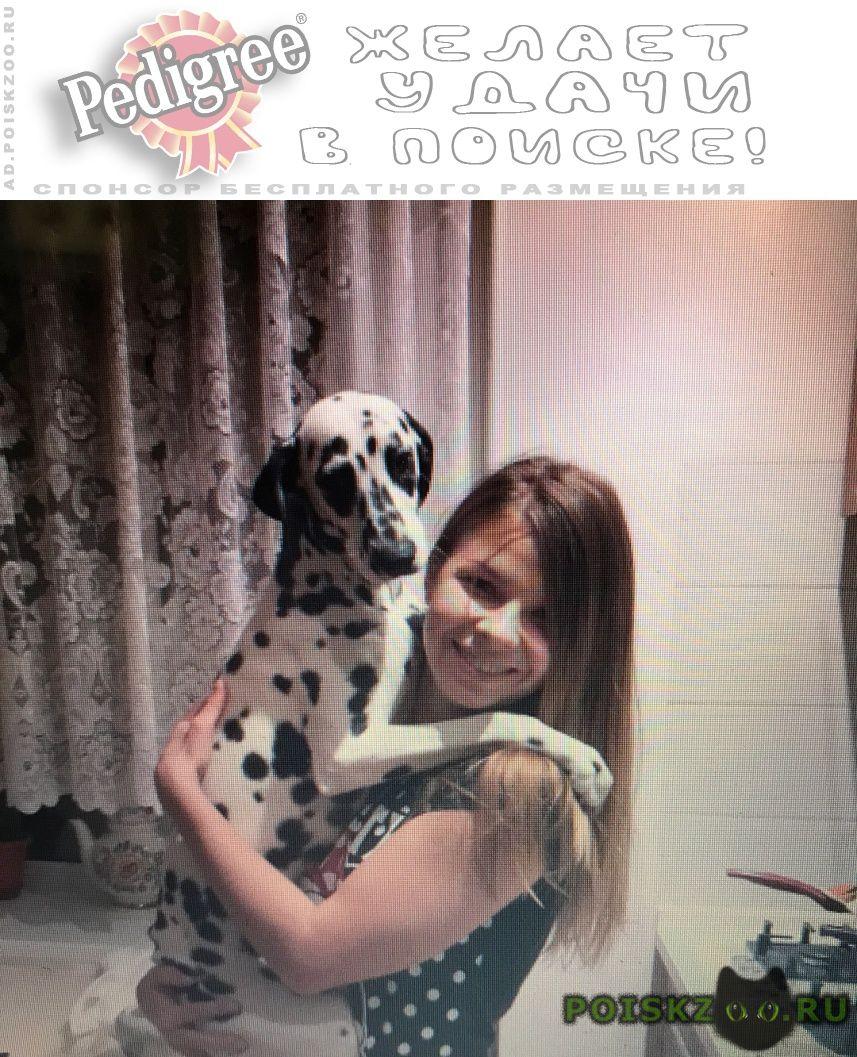 Пропала собака помогите найти #; #; #; #; #; #; г.Ростов-на-Дону