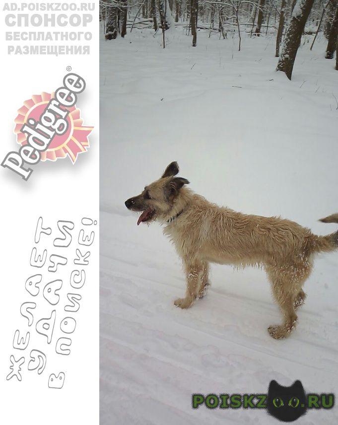 Пропала собака г.Нижний Новгород