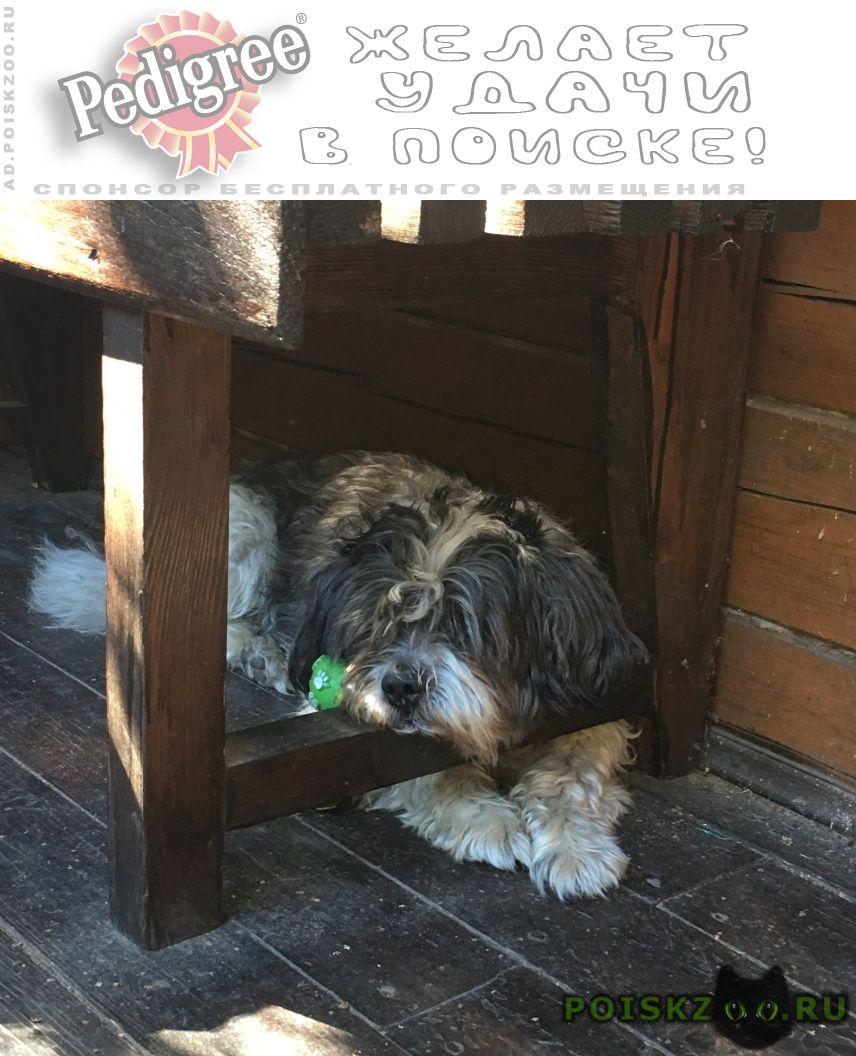Пропала собака кобель метро выхино-новогиреево г.Москва