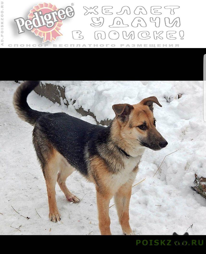 Пропала собака кобель район ул.авангардная г.Казань