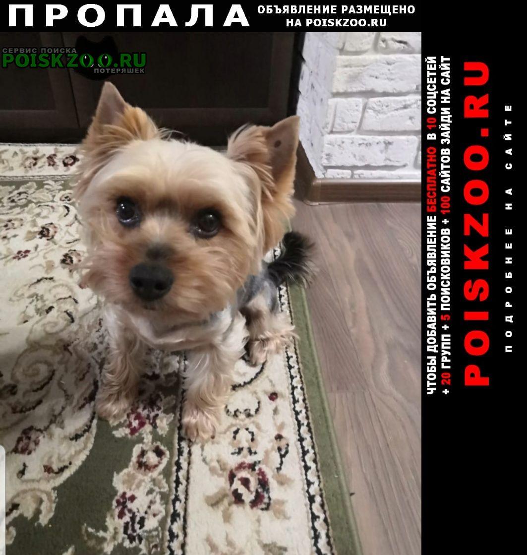 Лобня Пропала собака вознаграждение гарантировано