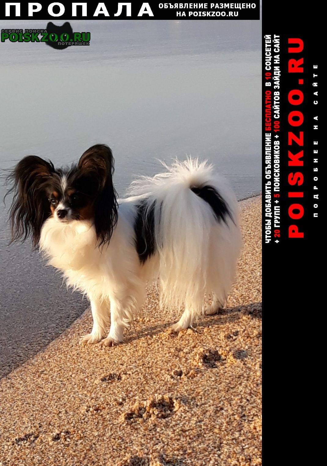Пропала собака вознаграждение.. руб Симферополь