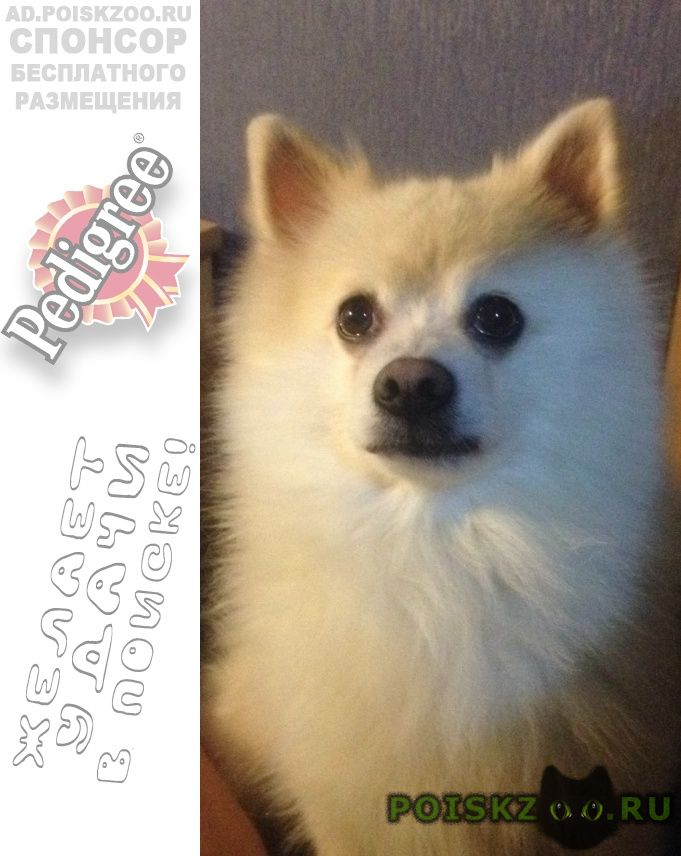 Пропала собака кобель п. резвань г.Калуга