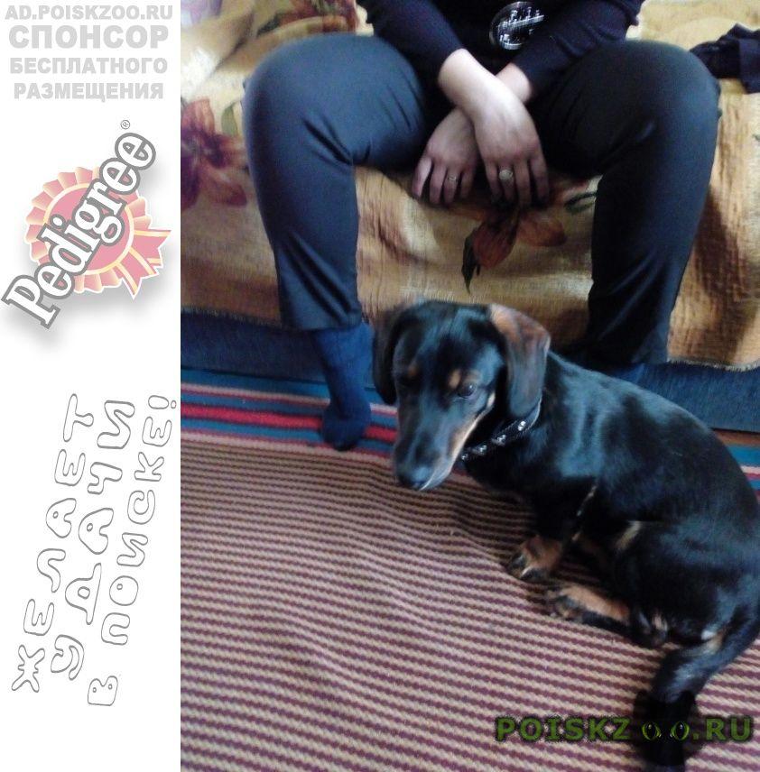 Пропала собака кобель помогите найти г.Хабаровск