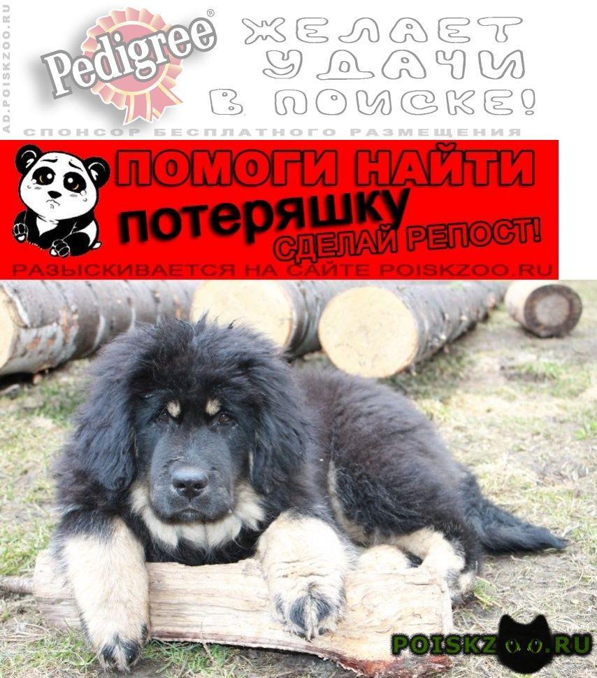 Пропала собака г.Новоуральск
