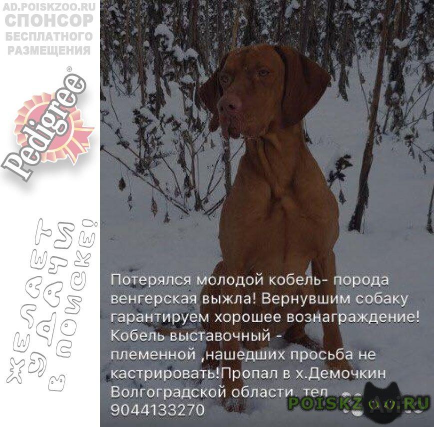 Пропала собака кобель г.Михайловка