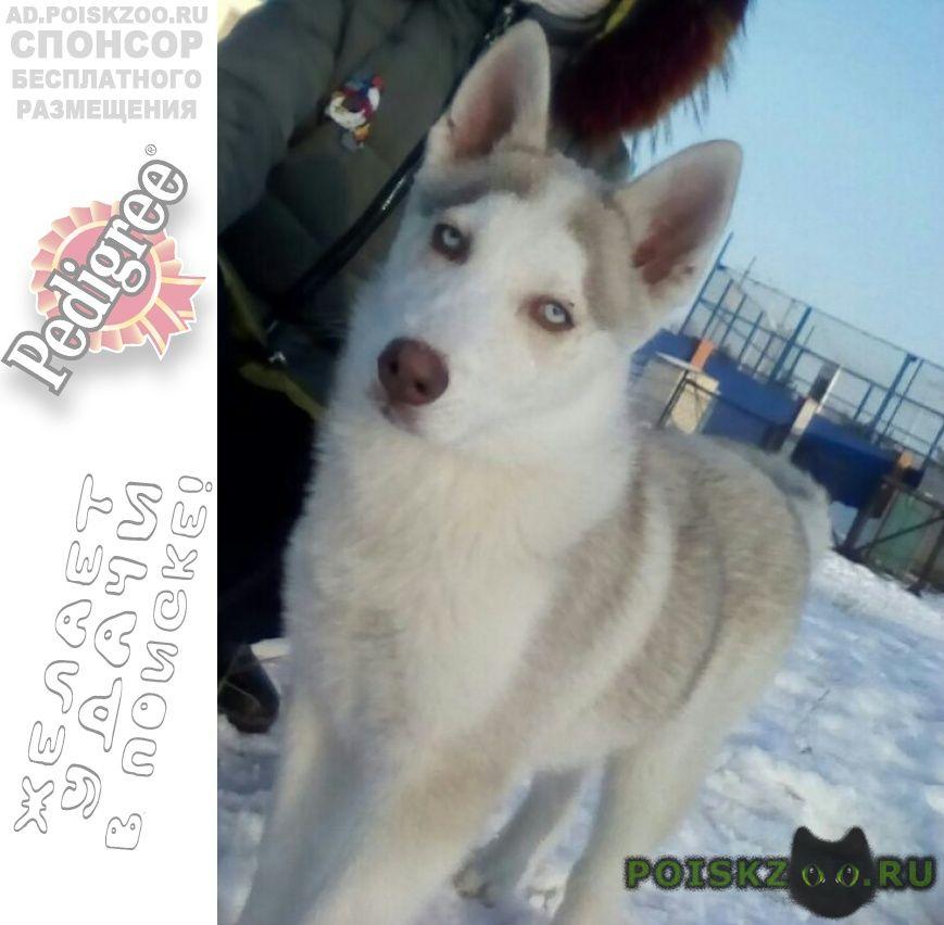 Пропала собака кобель г.Актобе (Актюбинск)