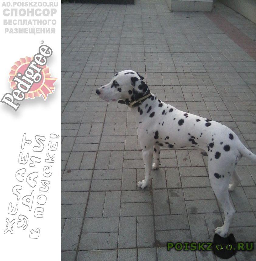 Пропала собака кобель помогаю информационно г.Нарофоминск