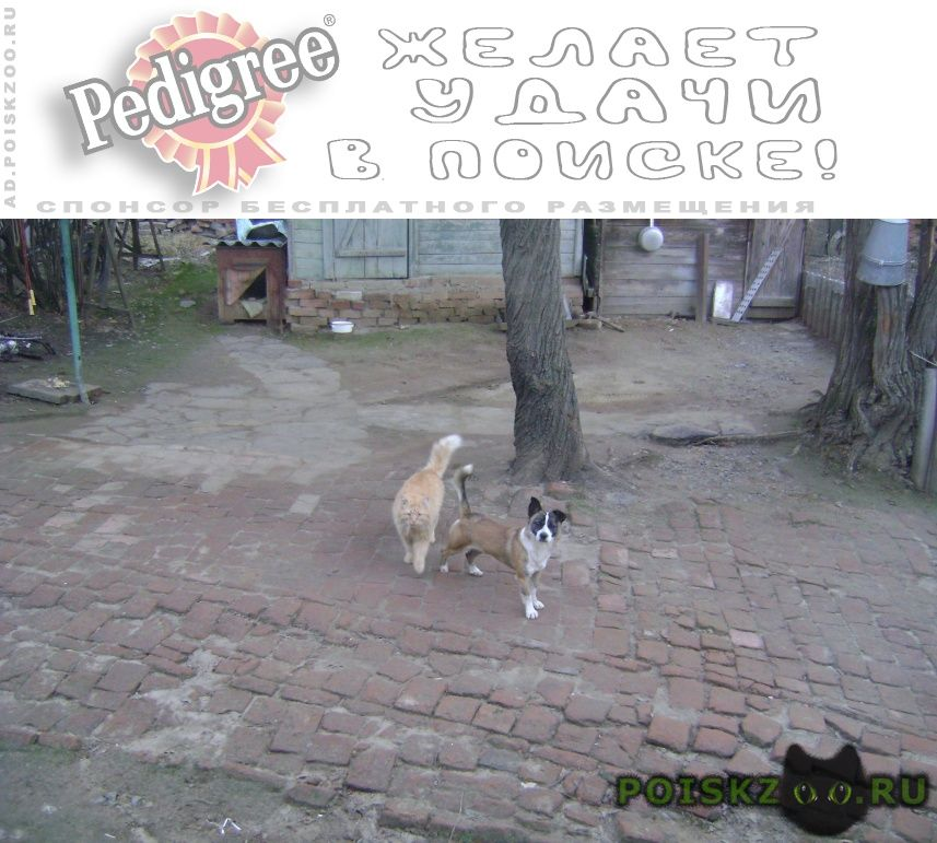 Пропала собака кобель г.Новочеркасск