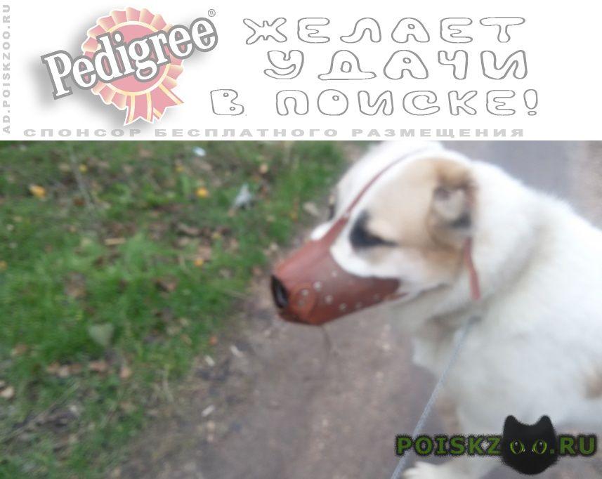 Пропала собака кобель пес породы алабай на фиоленте г.Севастополь