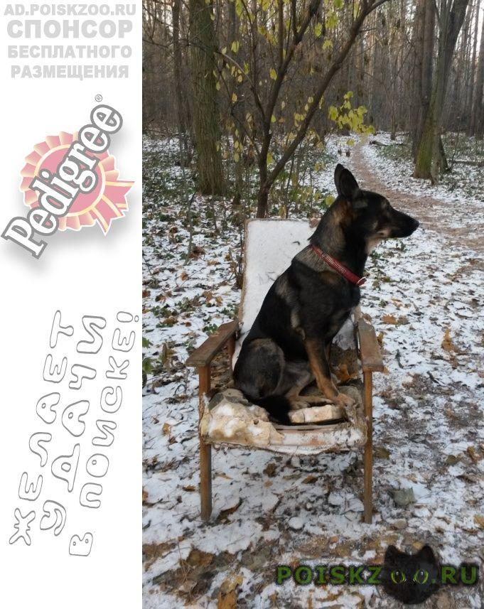Пропала собака кобель февраля. убежал в ом лесу г.Красногорск