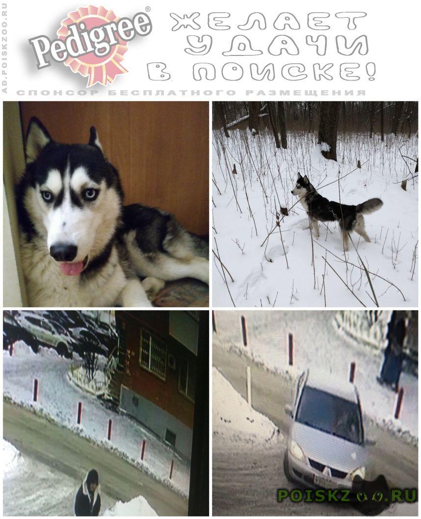 Пропала собака помогите найти г.Ростов-на-Дону
