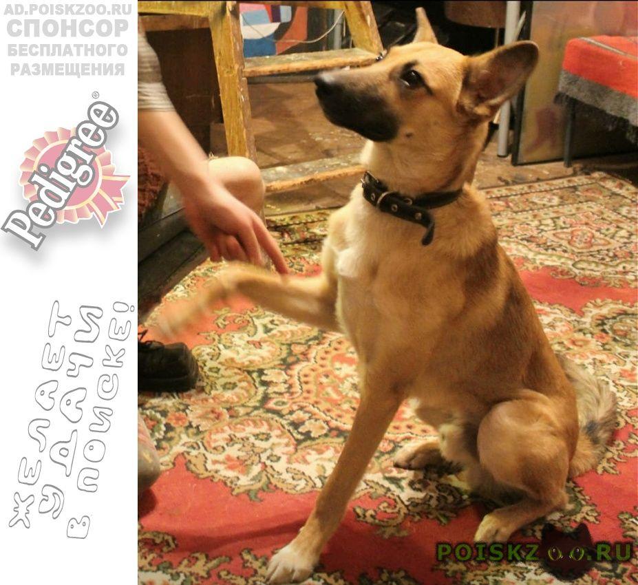 Пропала собака кобель цао, басманный, китай-город г.Москва